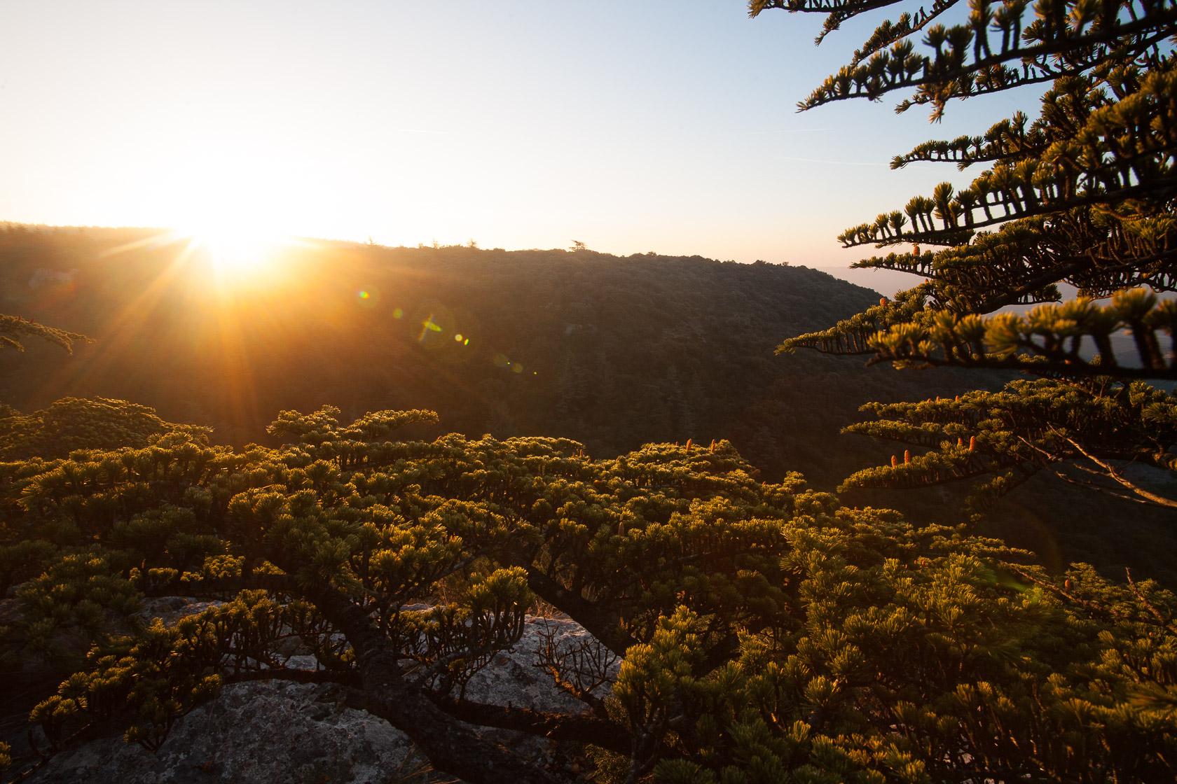 Levé de soleil sur la cédraie du Lubéron