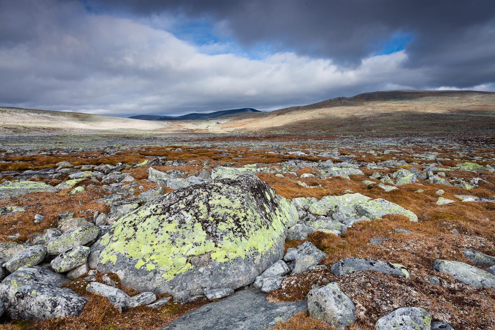 roches erratiques de moraines glaciaires dans le Dovrefjell
