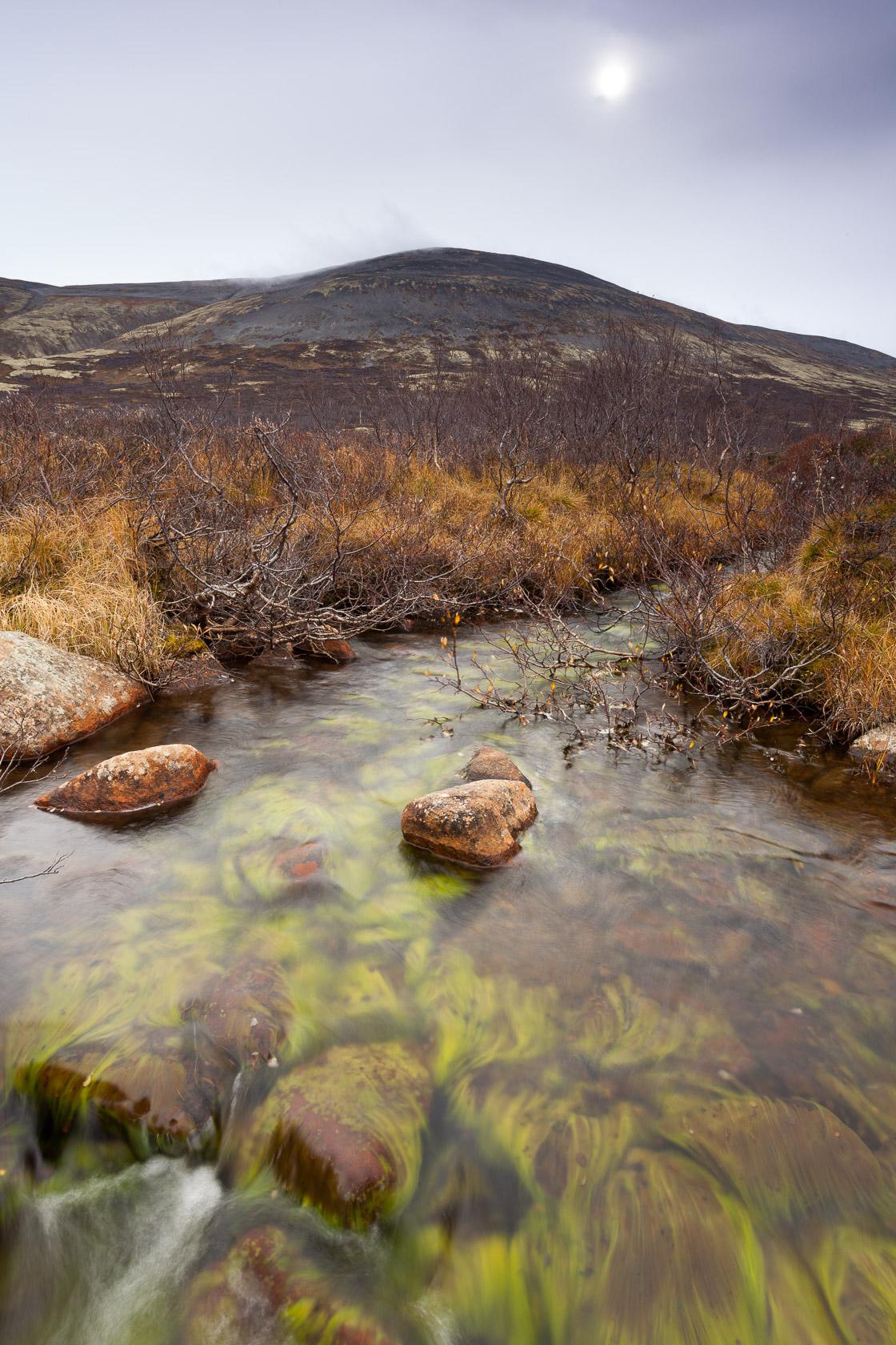 ruisseau dans le Dovrefjell en Norvège