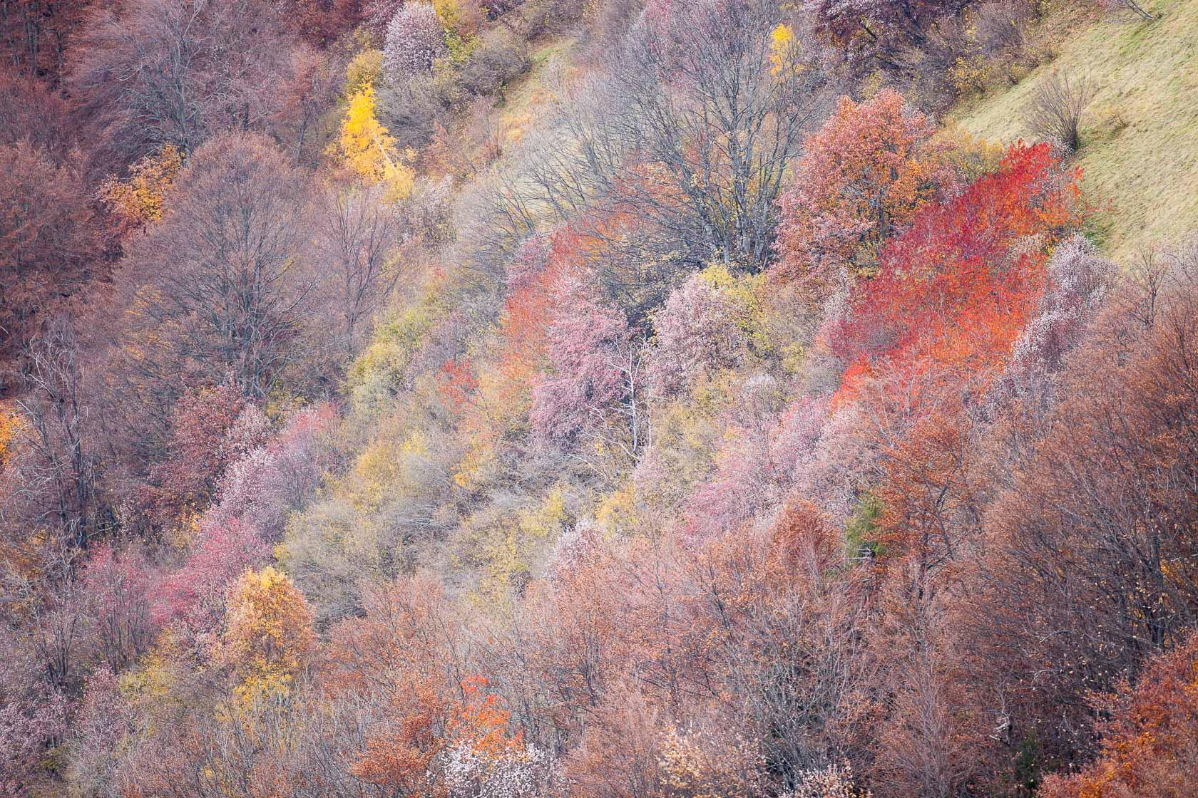 forêt de montagne en automne, dans les Bauges
