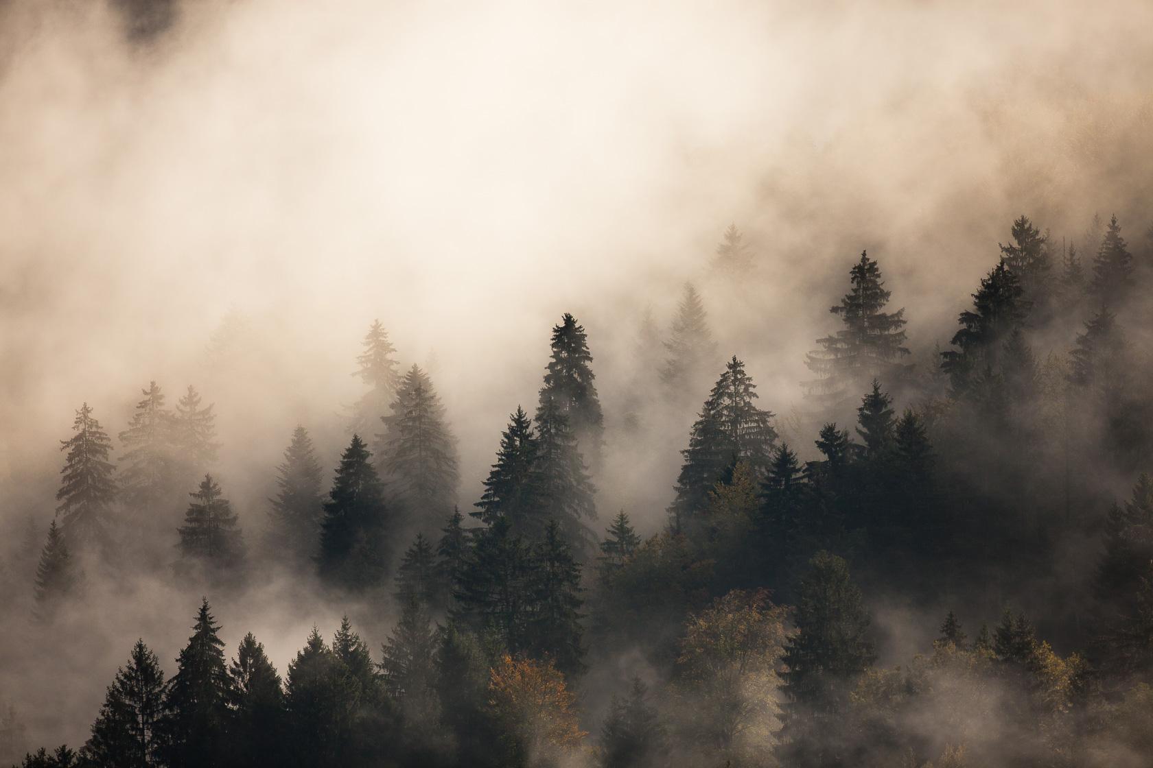 Forêt montagnarde dans les brumes, massif des Bauges