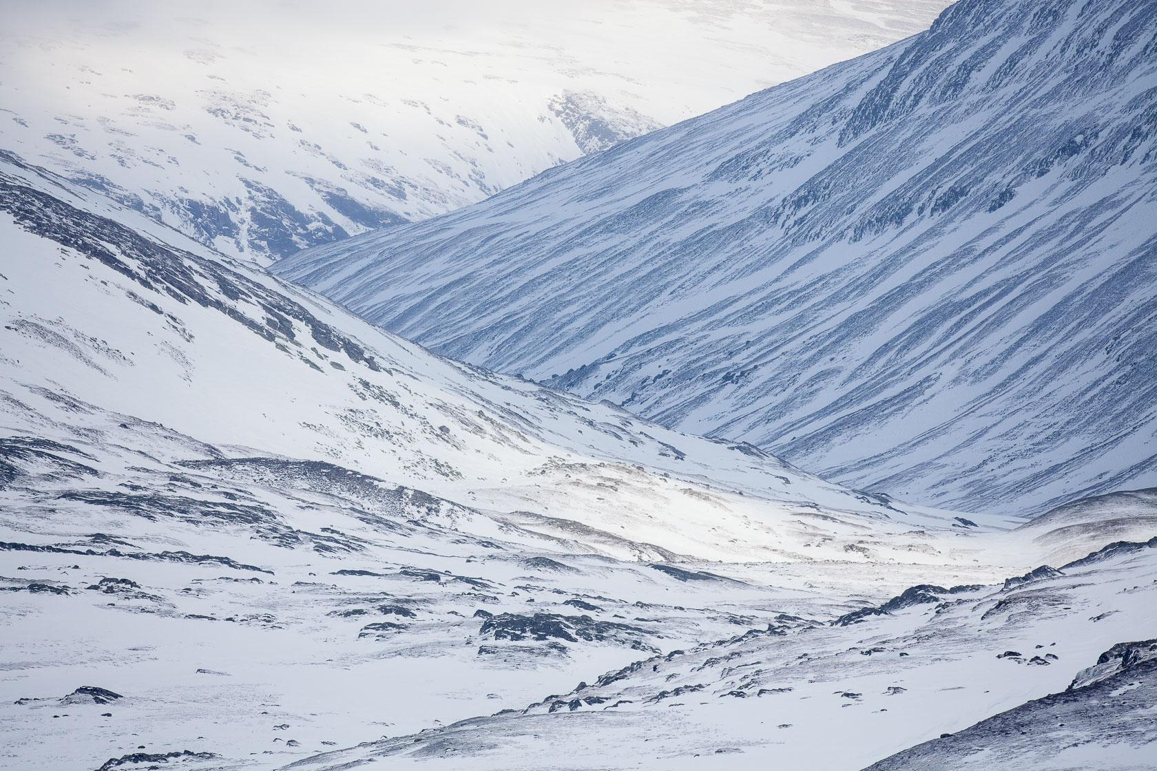parc national de Dovrefjell dans l'Oppdal en Norvège