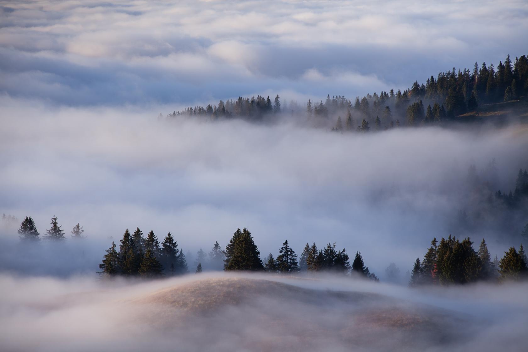la forêt du Semnoz dans la brume