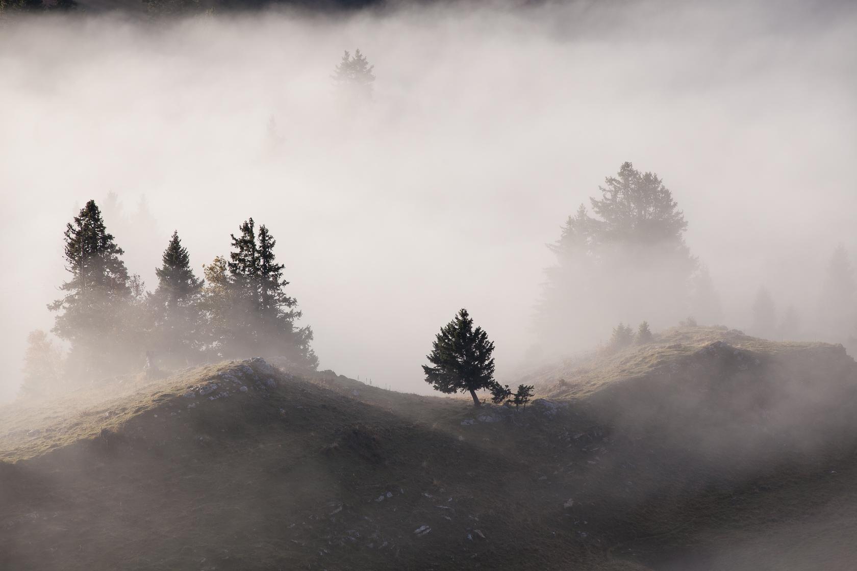 forêt d'épicéas dans les nuages au Semnoz