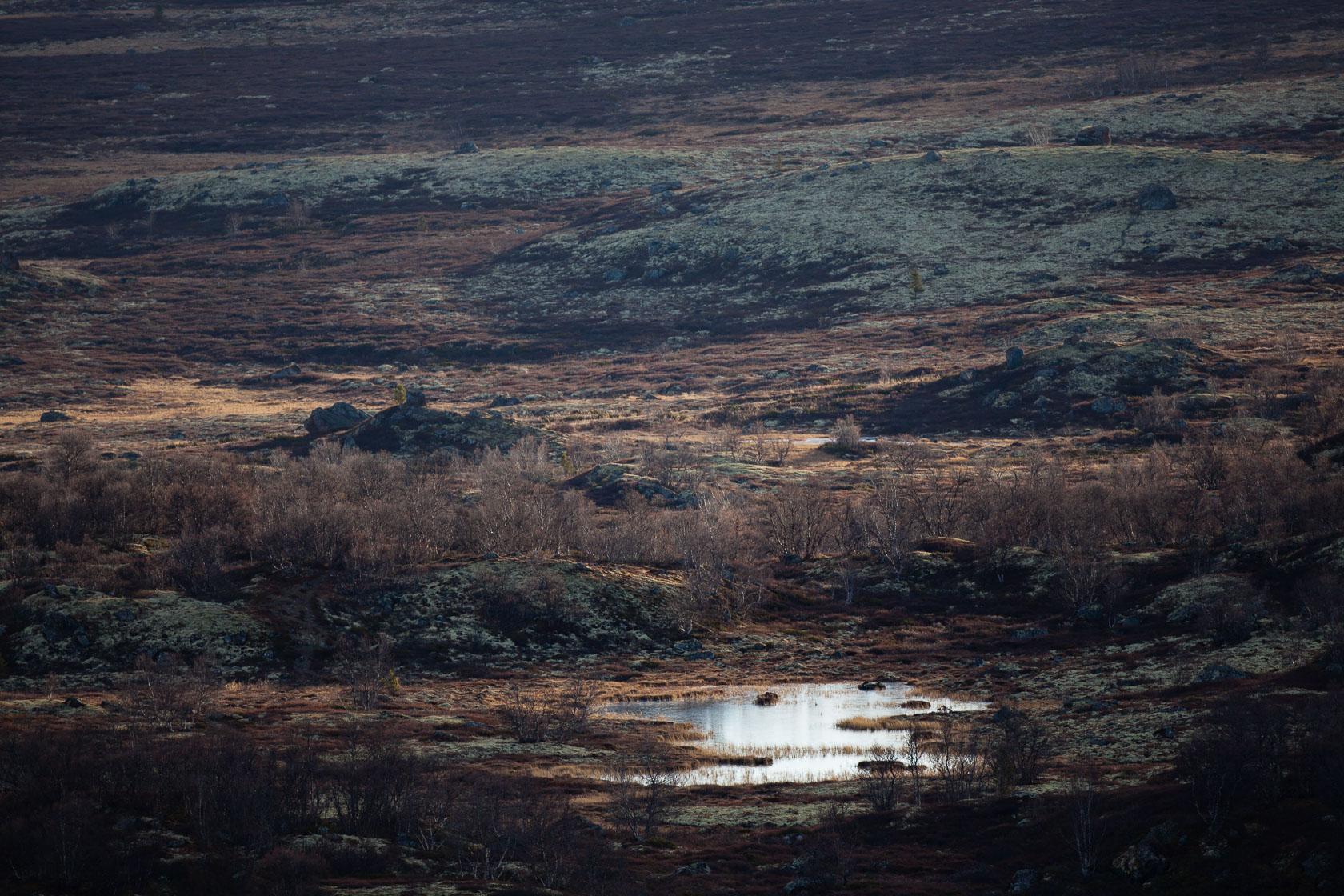 toundra du Dovrefjell en Norvège