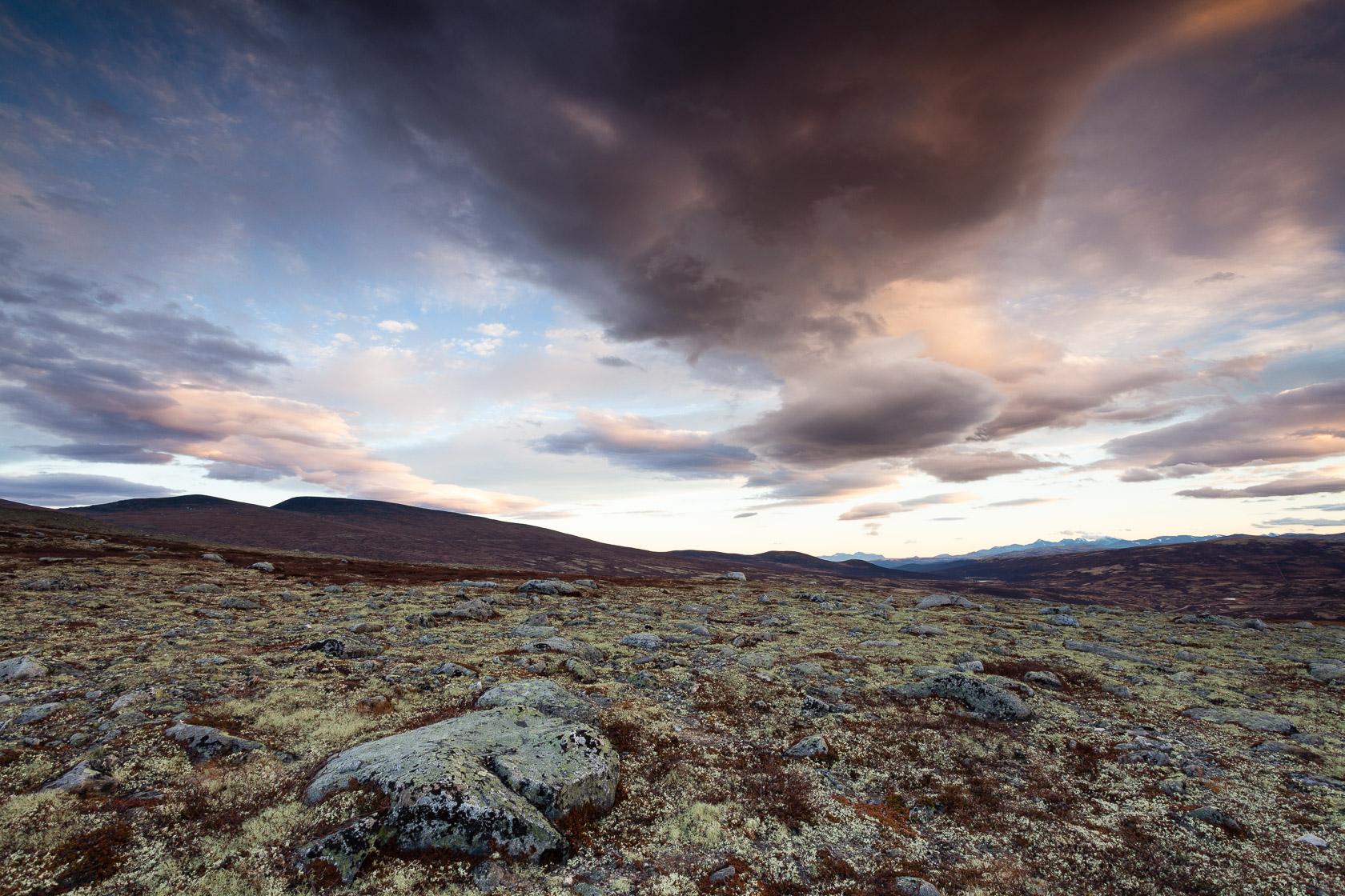 Toundra dans le parc national de Dovrefjell