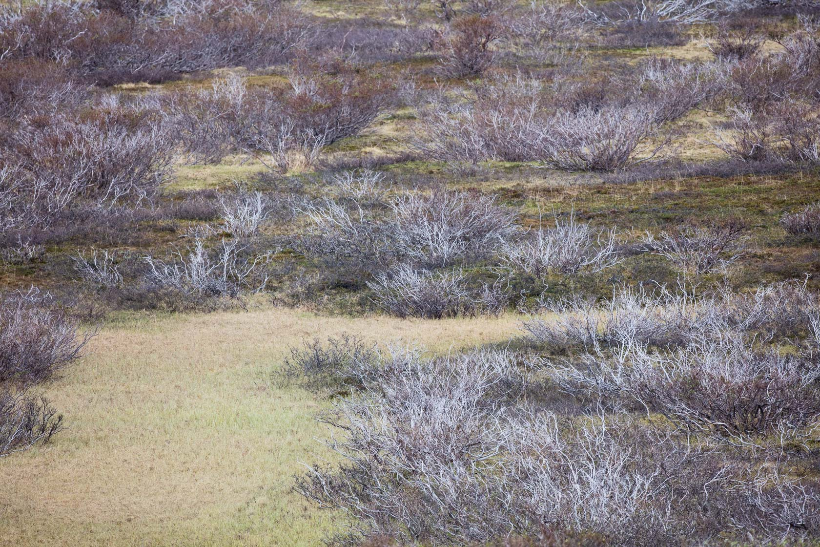 paysage de la toundra du parc national de Varanger, en Norvège