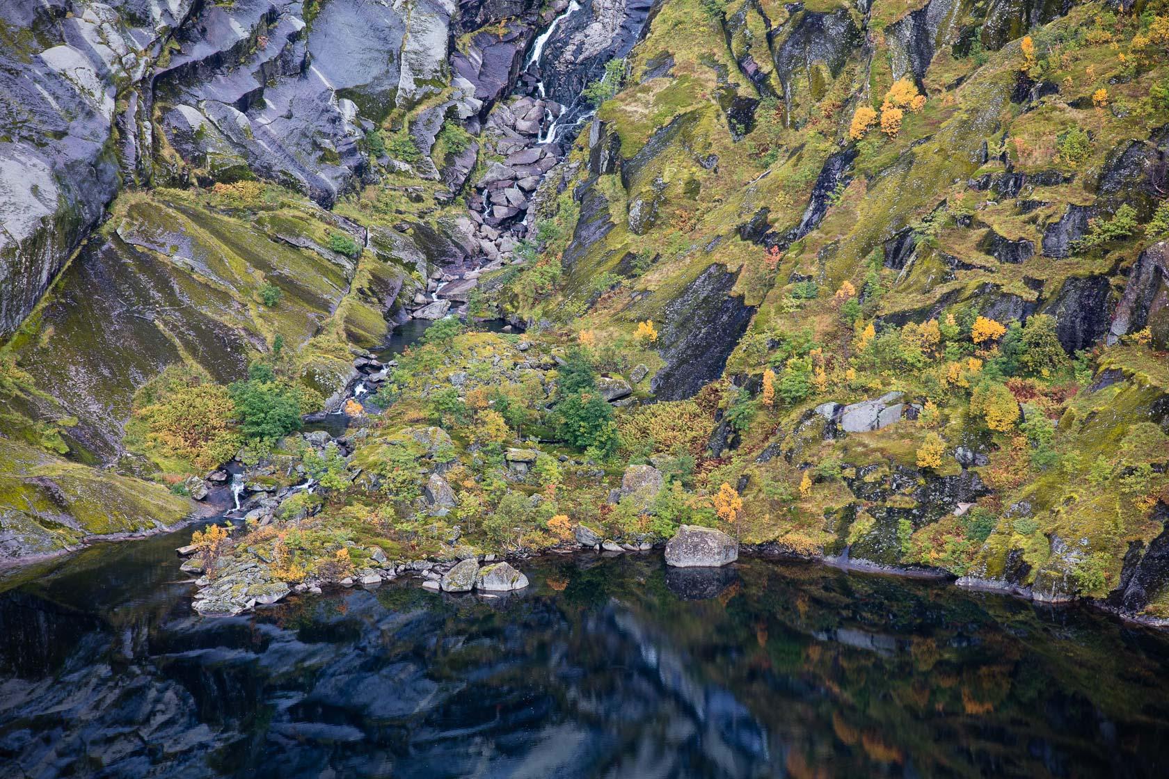 motifs de végétation et de roches dans le montagnes de Moskenes, pendant un voyage photo dans les Lofoten