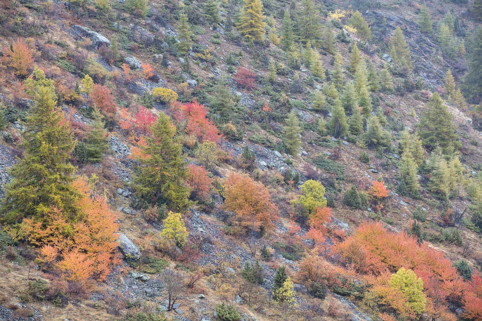 forêt de montagne au dessus de Névache