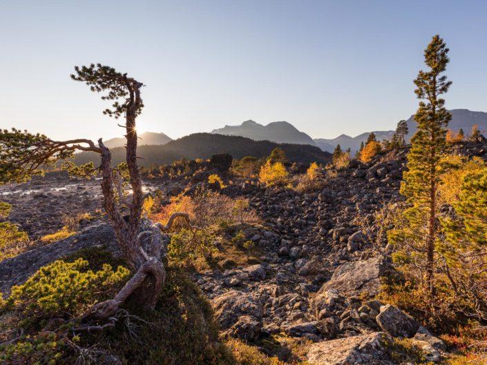 La ruska, des Lofoten aux Alpes de Lyngen