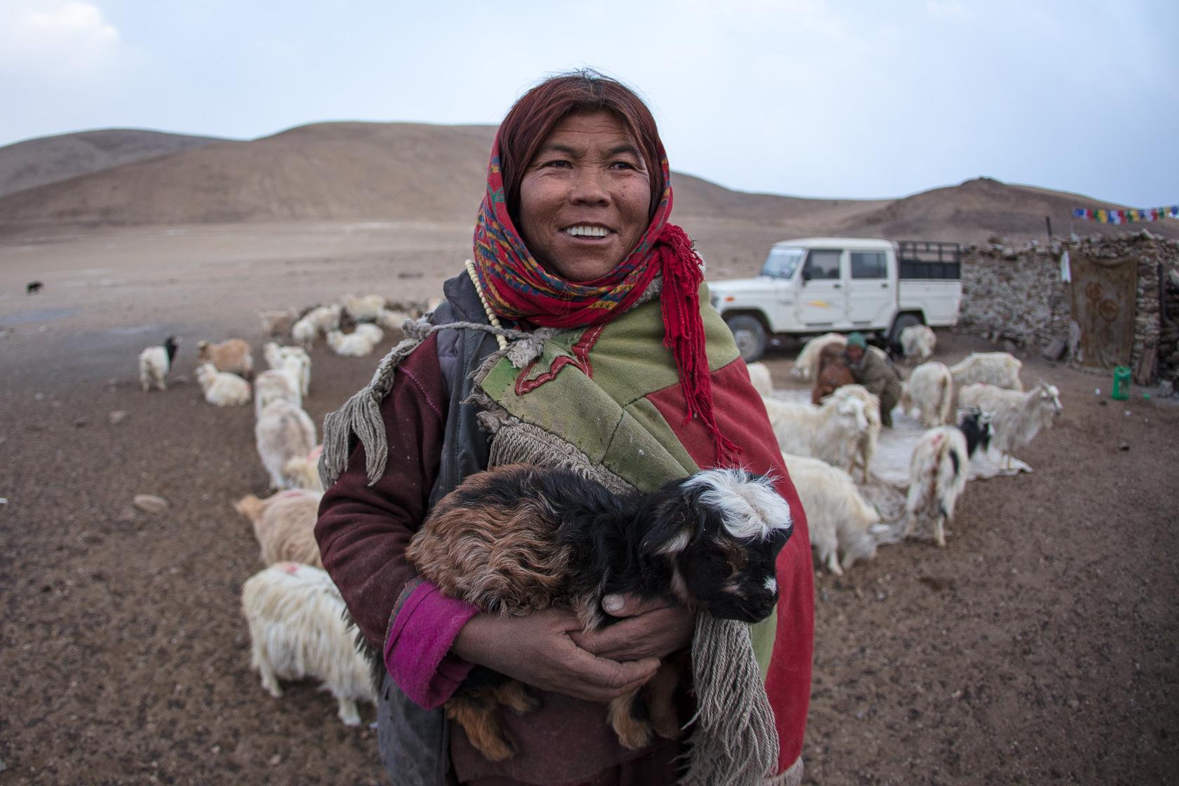 femme bergère changpa, près du Tso Kar, au ladakh en Inde