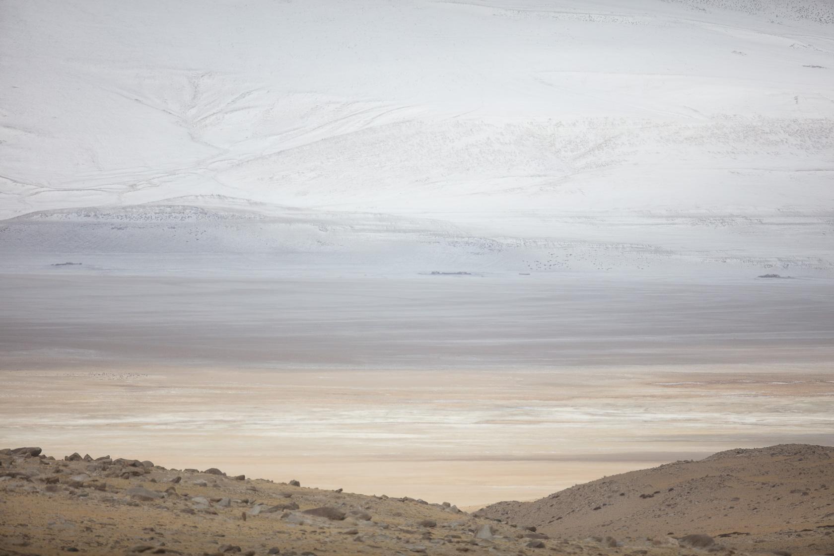 plaine du Tso Kar, dans le Changtang au Ladakh, en Inde