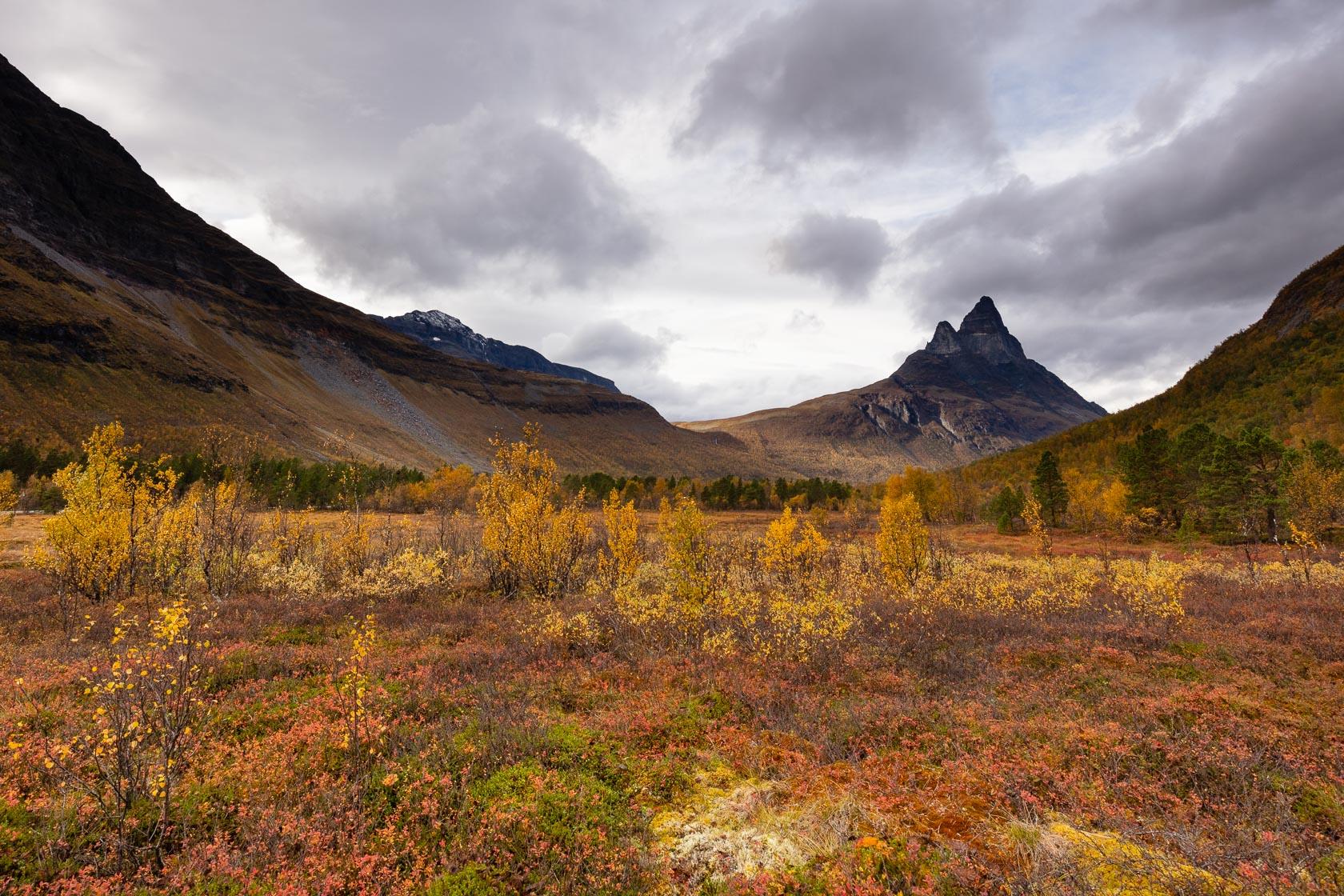 Tourbière en automne dans la Signaldalen, avec l'Otertinden, en Norvège