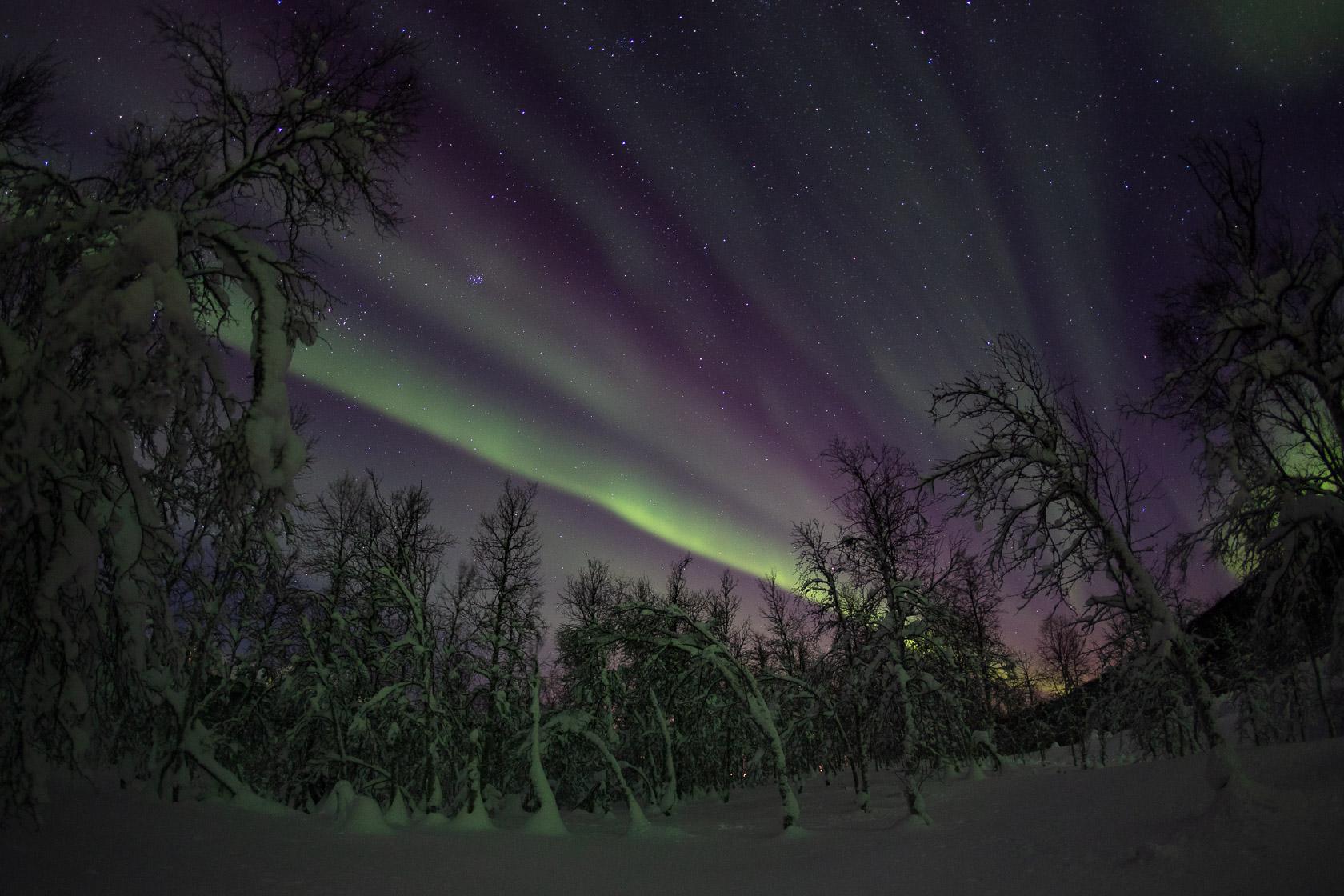 aurores boréales dans un forêt de bouleaux au coeur des Alpes de Lyngen, en Norvège