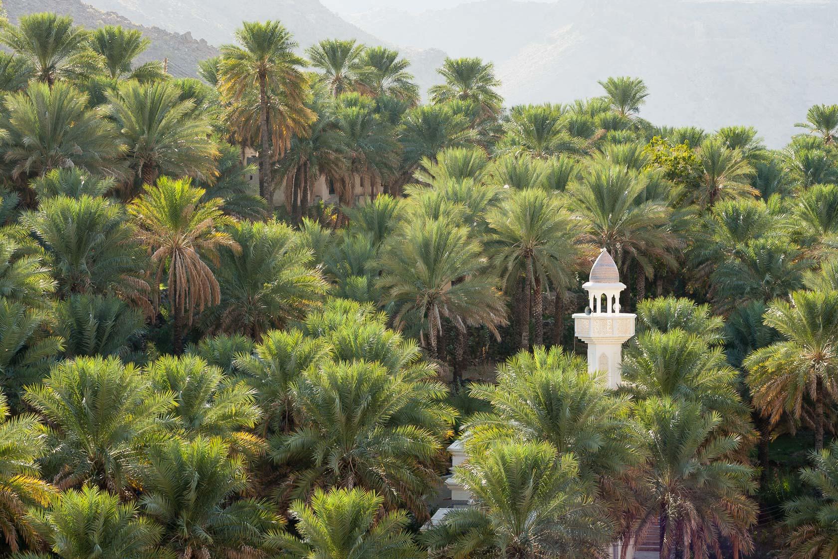 Palmeraie et minaret dans un wadi d'Oman