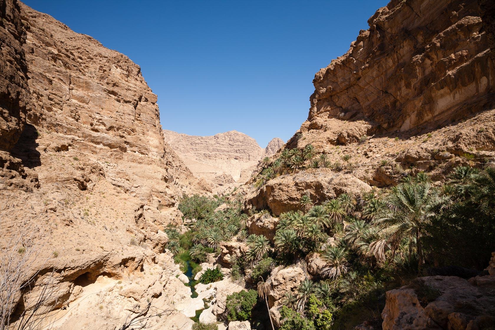 Palmeraie de wadi Taab, à Oman