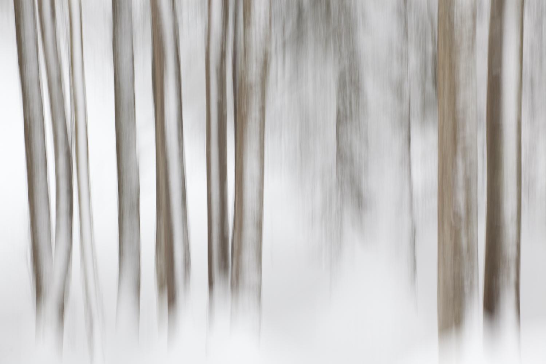forêt enneigée pendant un stage photo dans les Bauges en hiver